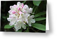 Romantic Rhododendron Greeting Card