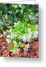 Romantic Skies Jasmine In Bloom Greeting Card