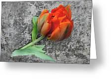 Romantic Tulip Greeting Card