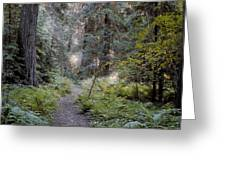 Roosevelt Grove Greeting Card