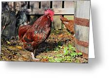 Rooster And Friend Greeting Card