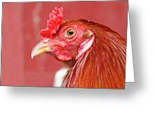 Rooster Close-up On A Reddish Background Greeting Card