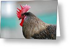 Rooster Comb Greeting Card