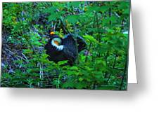 Rooster Grouse Posing Greeting Card