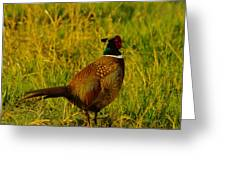Rooster Pheasant Greeting Card