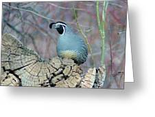 Rooster Quail  Greeting Card
