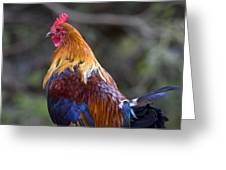 Rooster Rooster Greeting Card by Mike  Dawson