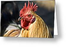 Rooster Up Close And Personal Greeting Card