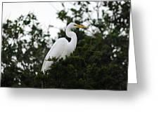 Roosting Egret Greeting Card