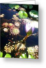 Root Of Beauty Greeting Card