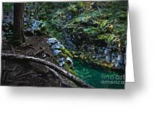 Rooted In Emerald  Greeting Card