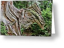 Roots - Welcome To Olympic National Park Wa Usa Greeting Card by Christine Till