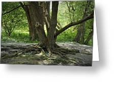 Roots Above Greeting Card