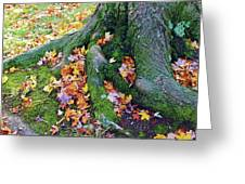 Roots And Leaves Greeting Card
