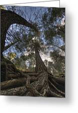 Roots Greeting Card by Bryan Hochman