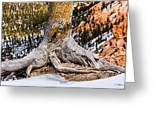 Roots Gripping The Edge Greeting Card