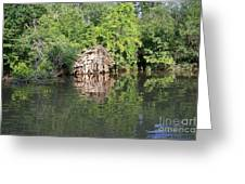 Roots In The Stream Greeting Card by Deborah MacQuarrie-Selib