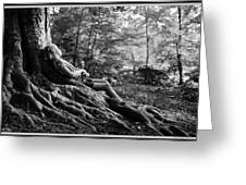Roots Of Contemplation Greeting Card