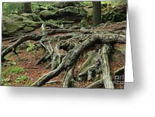 Roots On The Forest Floor Greeting Card