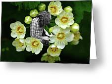 Rock In The Garden Greeting Card