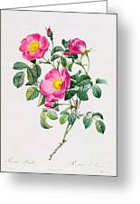 Rosa Lumila Greeting Card by Pierre Joseph Redoute