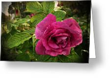 Rosa Rugosa Art Photo Greeting Card
