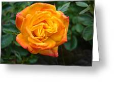 Rose - Irish Eyes Greeting Card