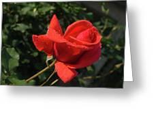 Rose 03 Greeting Card