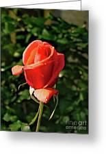 Rose 04 Greeting Card