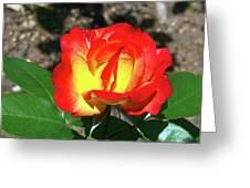 Rose 07 Greeting Card