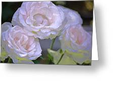 Rose 120 Greeting Card by Pamela Cooper
