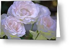 Rose 120 Greeting Card by Pamela Cooper
