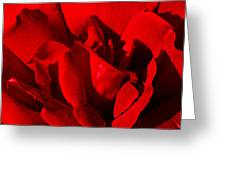 Rose 2 Greeting Card