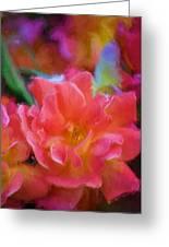 Rose 337 Greeting Card