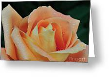 Rose 37 Greeting Card