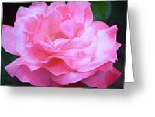 Rose 384 Greeting Card