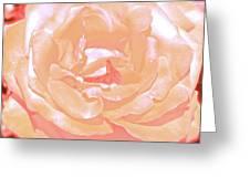 Rose 41 Greeting Card