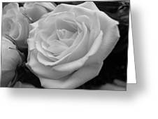 Rose 6 Greeting Card