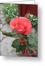 Rose America Greeting Card