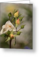 Rose And Buds Greeting Card by Atul Daimari