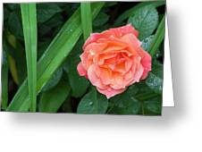Rose And Day Lily Lives Greeting Card