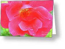 Rose And Raindrops Greeting Card