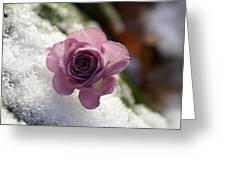 Rose And Snow Greeting Card