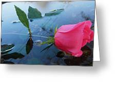 Rose And Water. Greeting Card