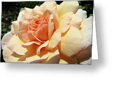 Rose Art Peach Orange Roses Sunlit Florals Giclee Baslee Troutman Greeting Card