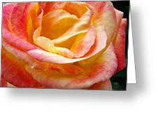 Rose Art Pink Yellow Summer Rose Floral Baslee Troutman Greeting Card