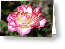 Rose Art Prints Pink White Roses Garden Baslee Troutman Greeting Card