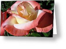 Rose Artwork Floral Pink White Roses Baslee Troutman Greeting Card