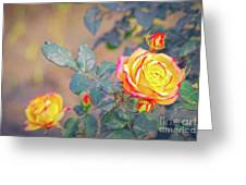 Rose At Sunset Greeting Card