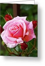 Rose Attendants Greeting Card